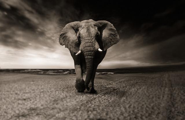 Image Elefanten Puzzle